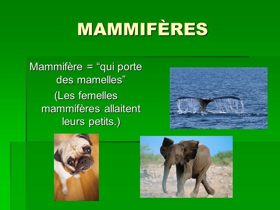 MAMMIFÈRES Mammifère = qui porte des mamelles