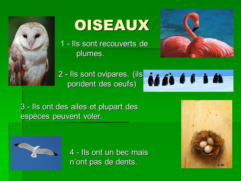 OISEAUX 1 - Ils sont recouverts de plumes.
