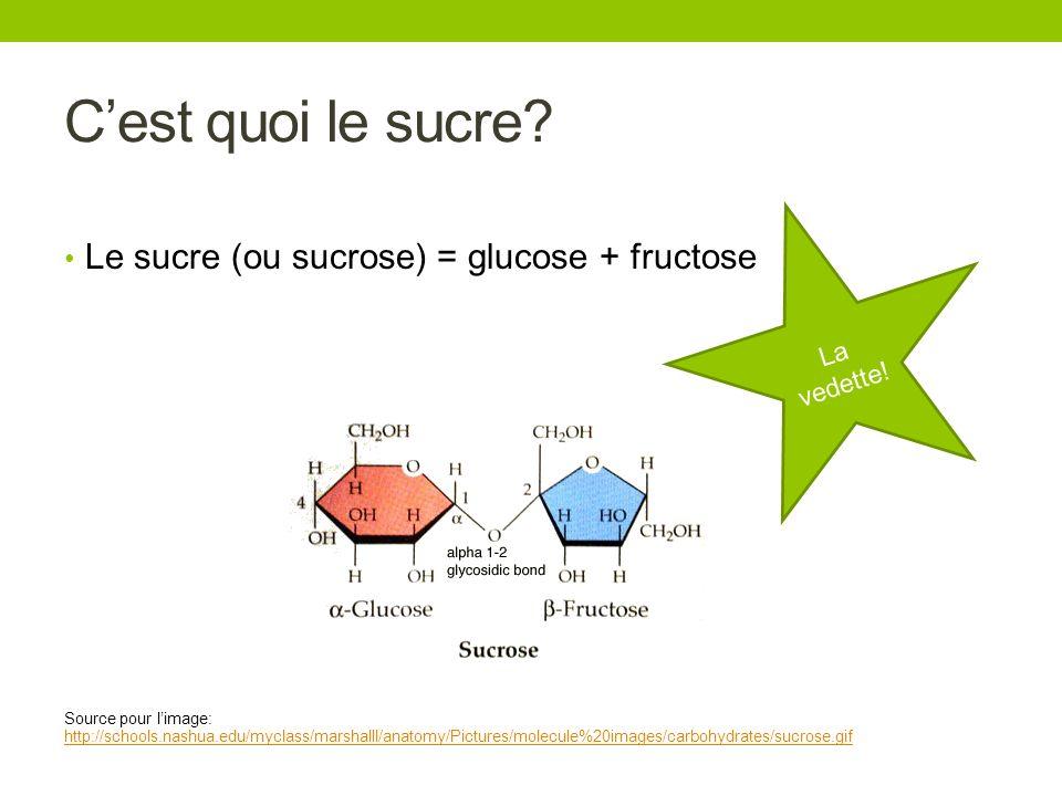 C'est quoi le sucre Le sucre (ou sucrose) = glucose + fructose