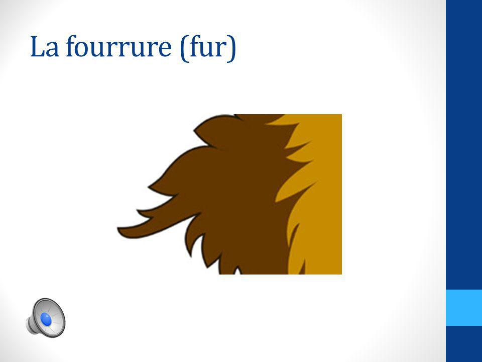 La fourrure (fur)