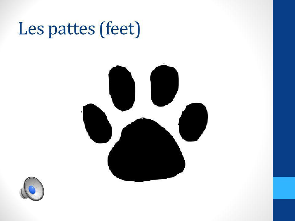 Les pattes (feet)