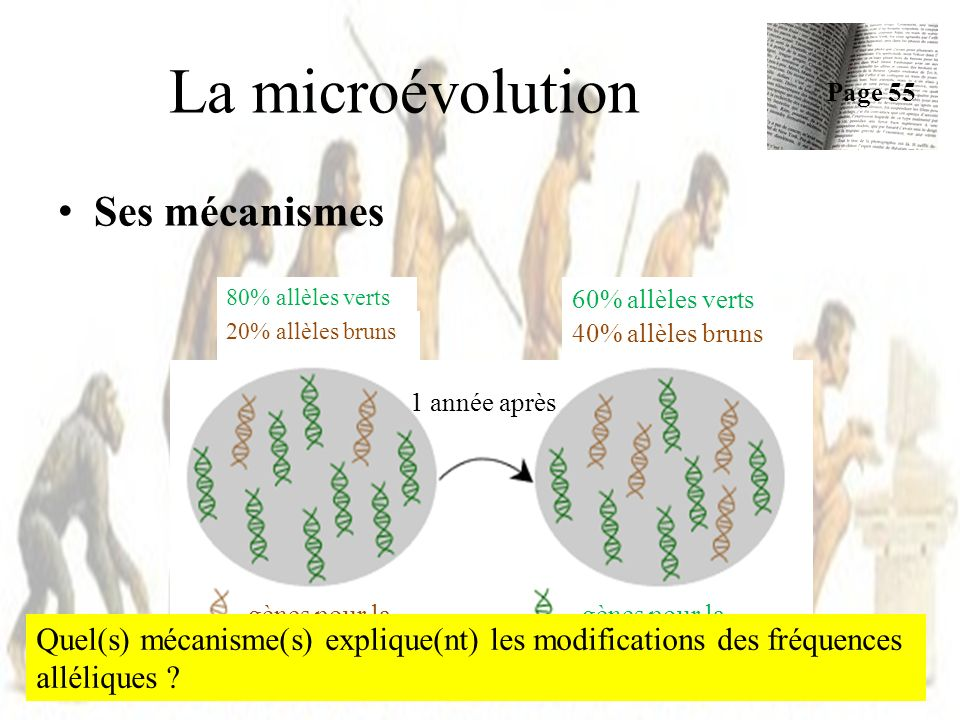 La microévolution Ses mécanismes