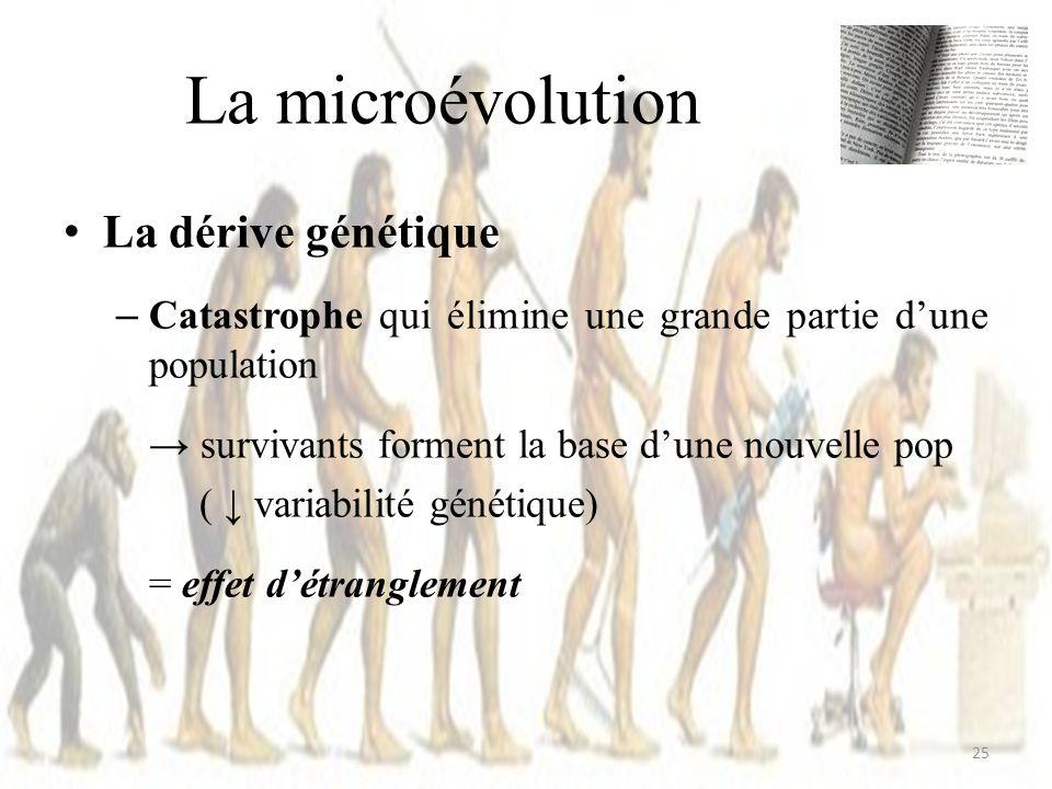 La microévolution La dérive génétique