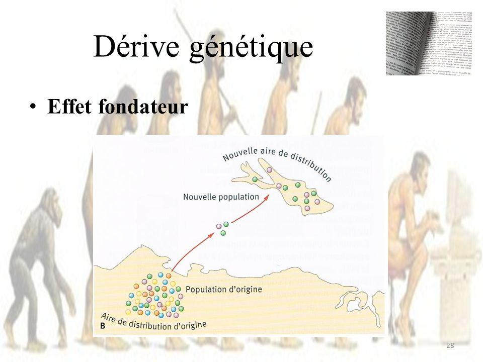 Dérive génétique Effet fondateur