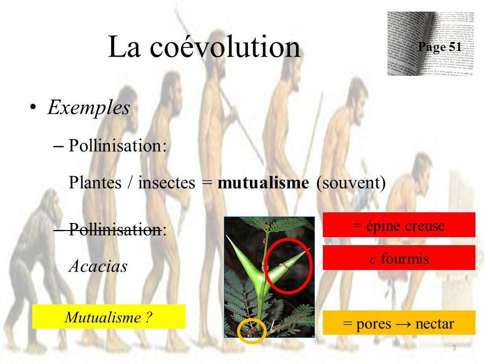 La coévolution Exemples Pollinisation:
