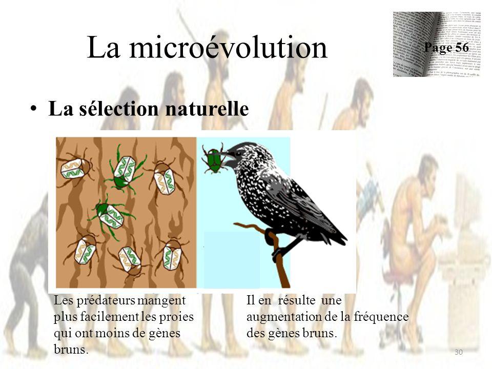 La microévolution La sélection naturelle Page 56