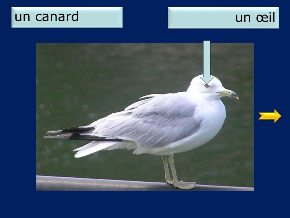 un canard un œil 2