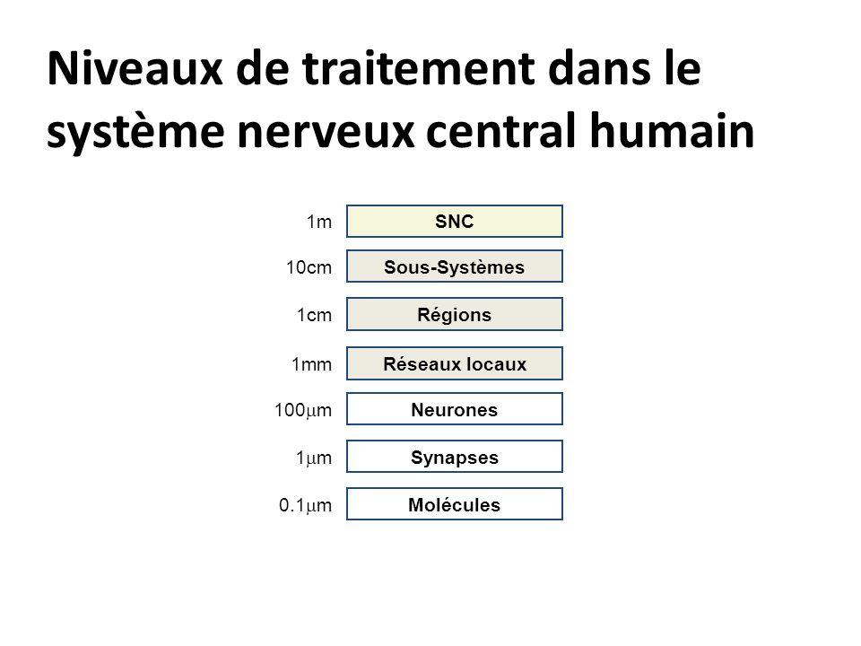 Niveaux de traitement dans le système nerveux central humain