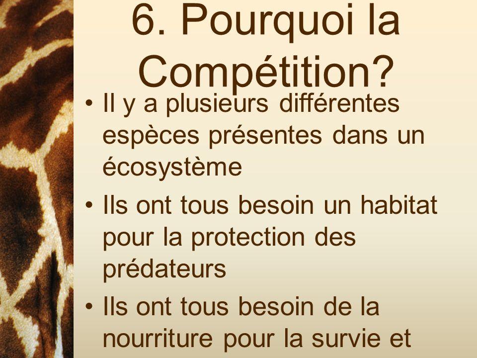 6. Pourquoi la Compétition