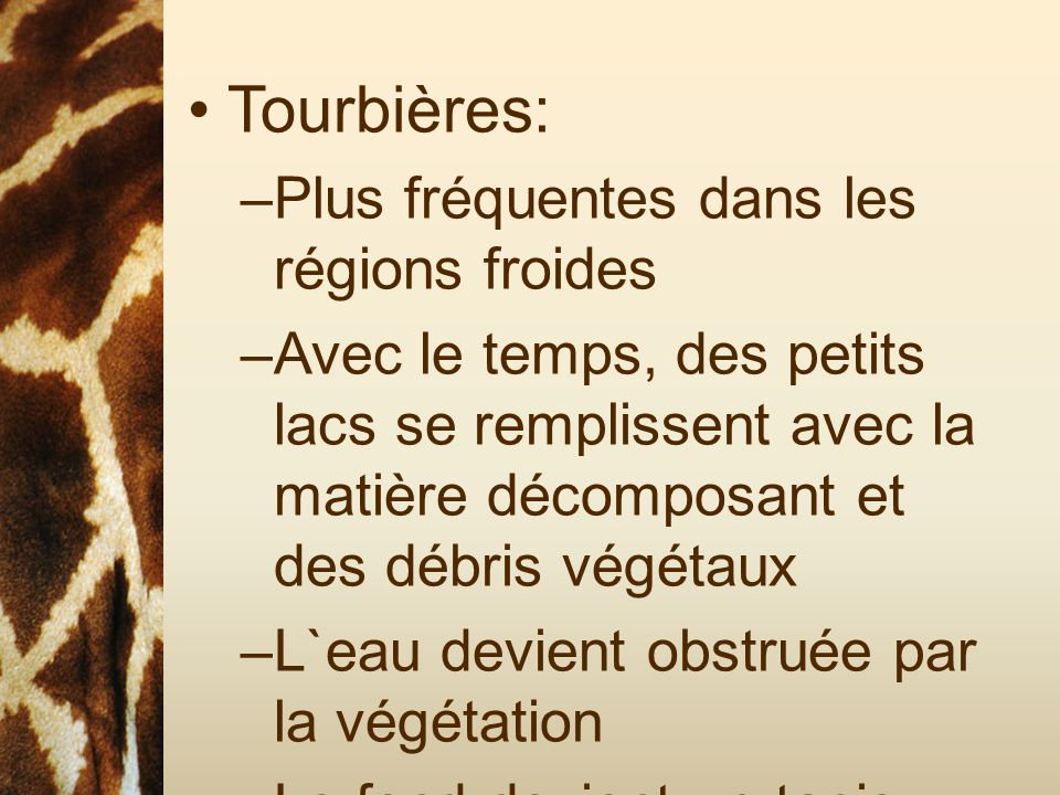 Tourbières: Plus fréquentes dans les régions froides
