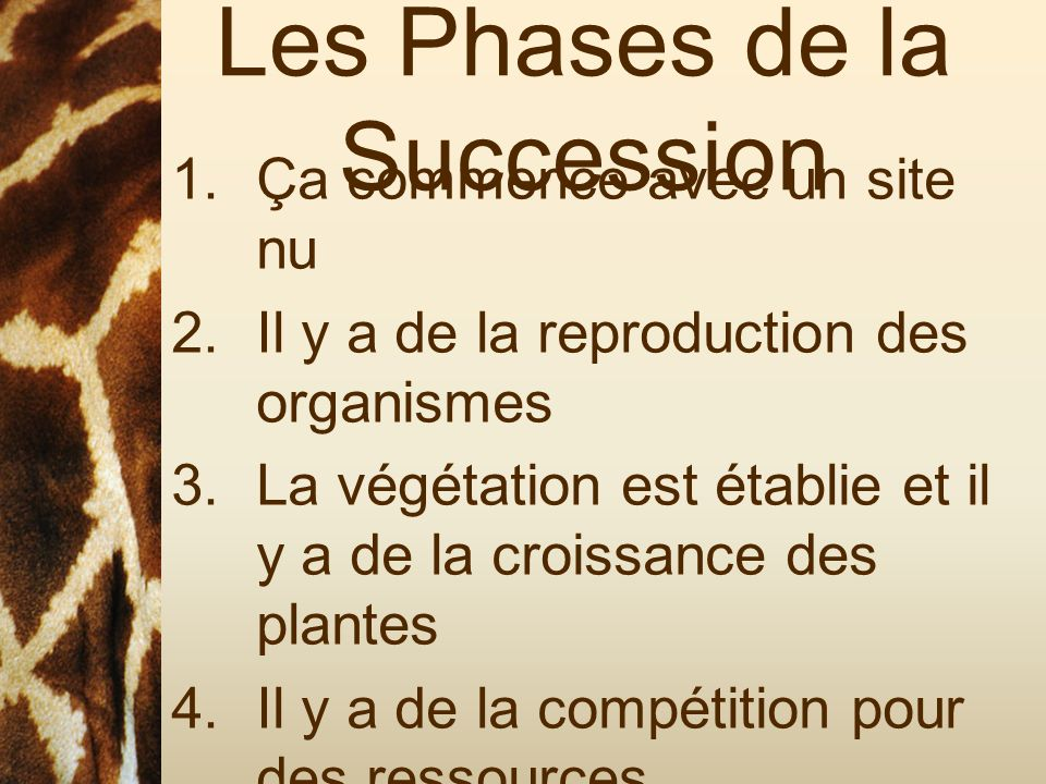 Les Phases de la Succession