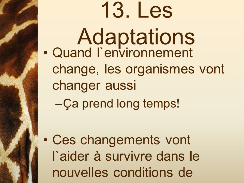 13. Les Adaptations Quand l`environnement change, les organismes vont changer aussi. Ça prend long temps!