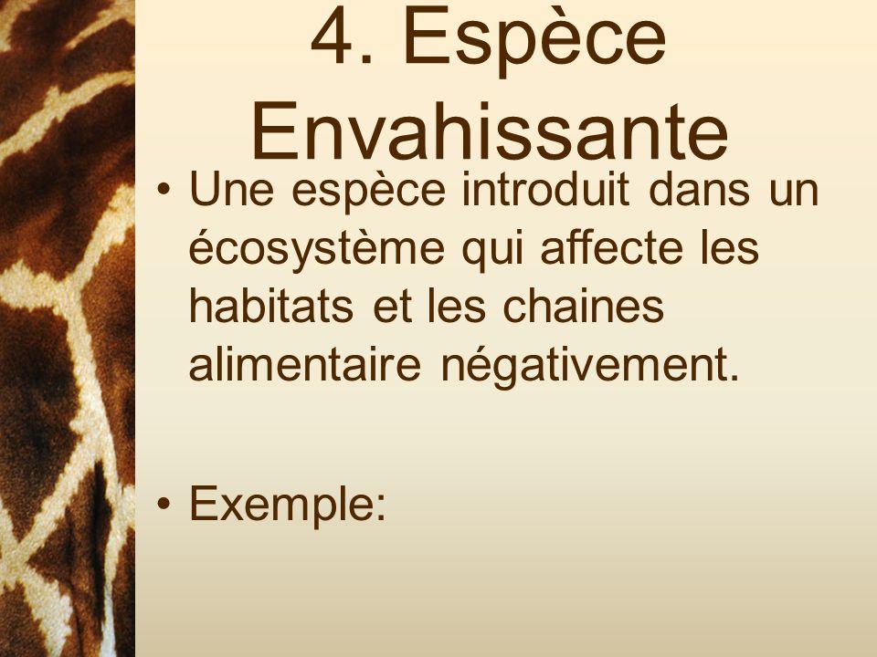 4. Espèce Envahissante Une espèce introduit dans un écosystème qui affecte les habitats et les chaines alimentaire négativement.