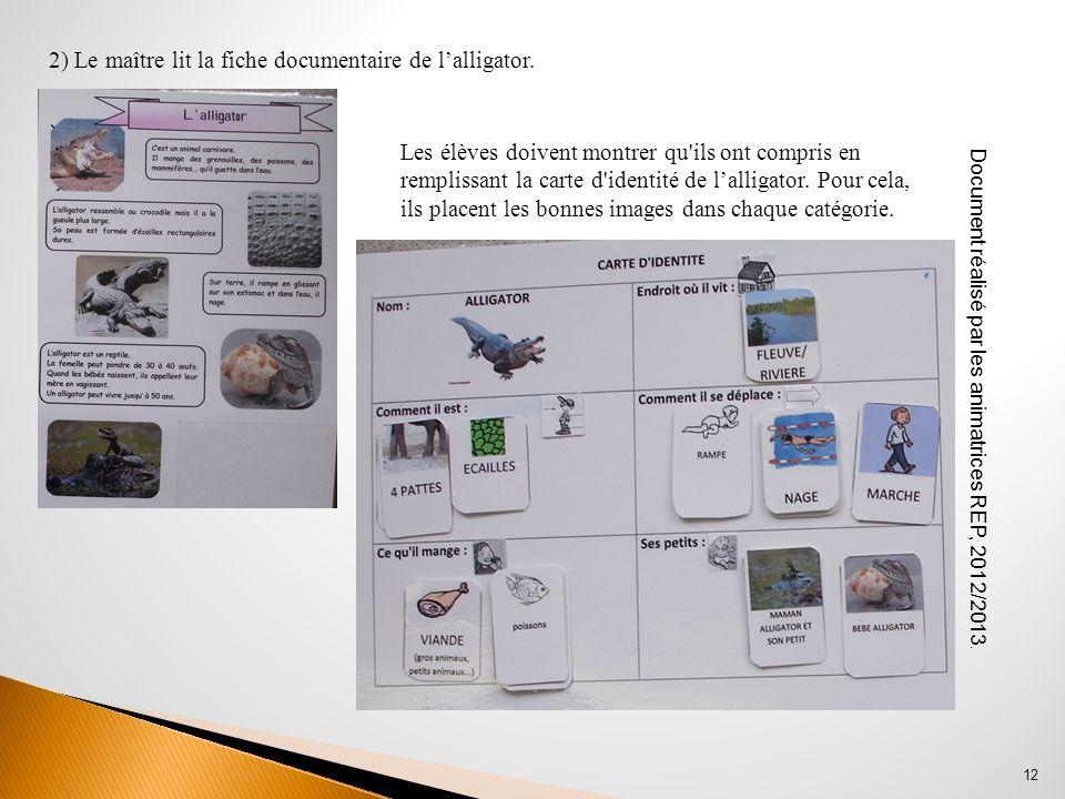 2) Le maître lit la fiche documentaire de l'alligator.