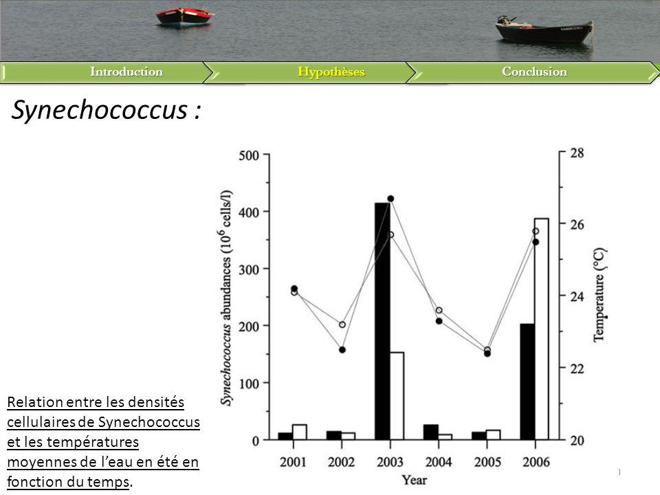 Introduction Hypothèses. Conclusion. Synechococcus :