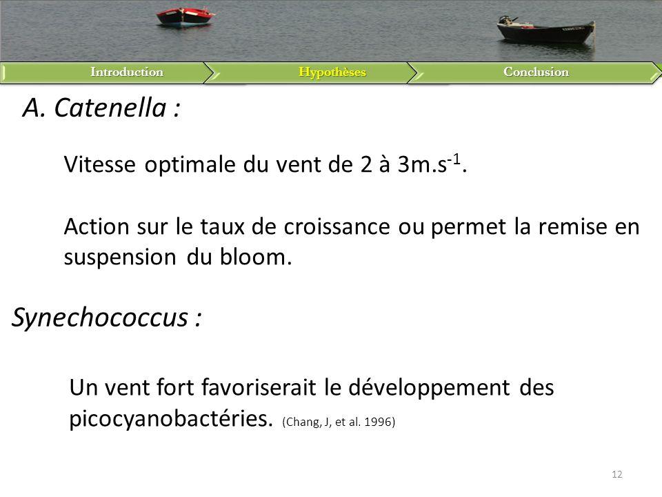 A. Catenella : Synechococcus :