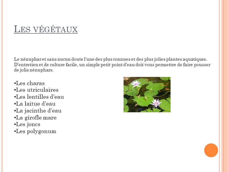 Les végétaux Les charas Les utriculaires Les lentilles d'eau