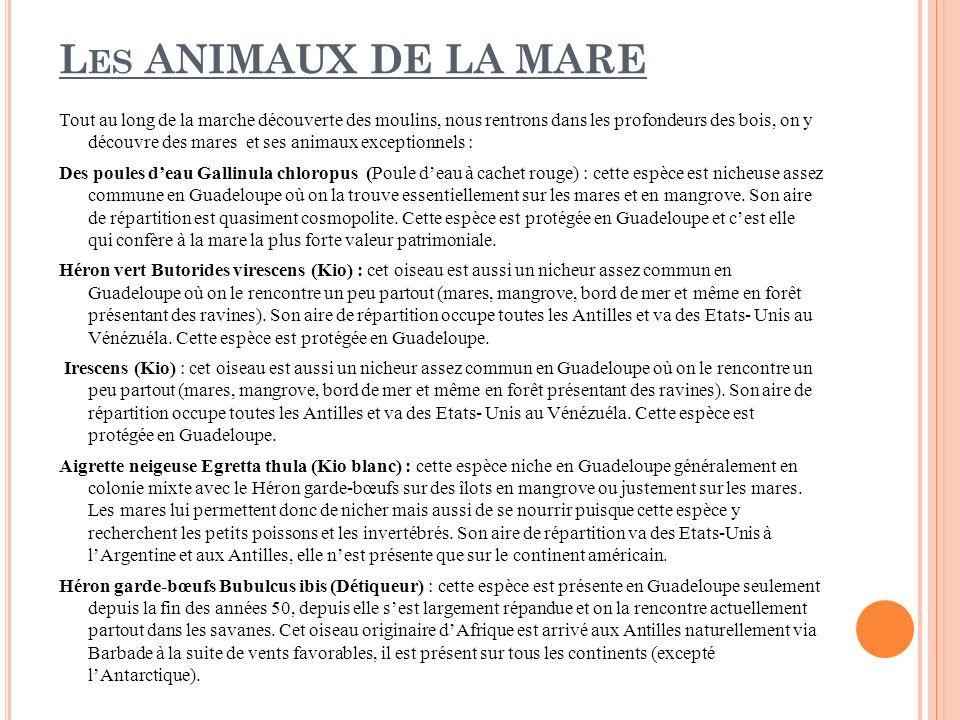 Les ANIMAUX DE LA MARE
