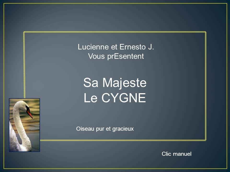 Sa Majeste Le CYGNE Lucienne et Ernesto J. Vous prEsentent