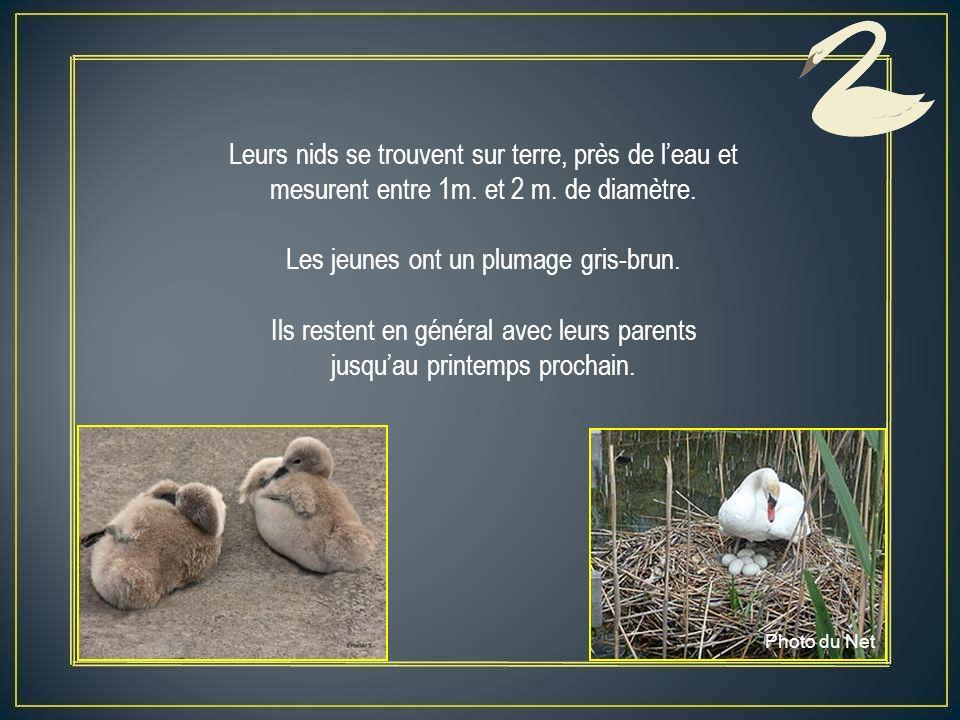Leurs nids se trouvent sur terre, près de l'eau et