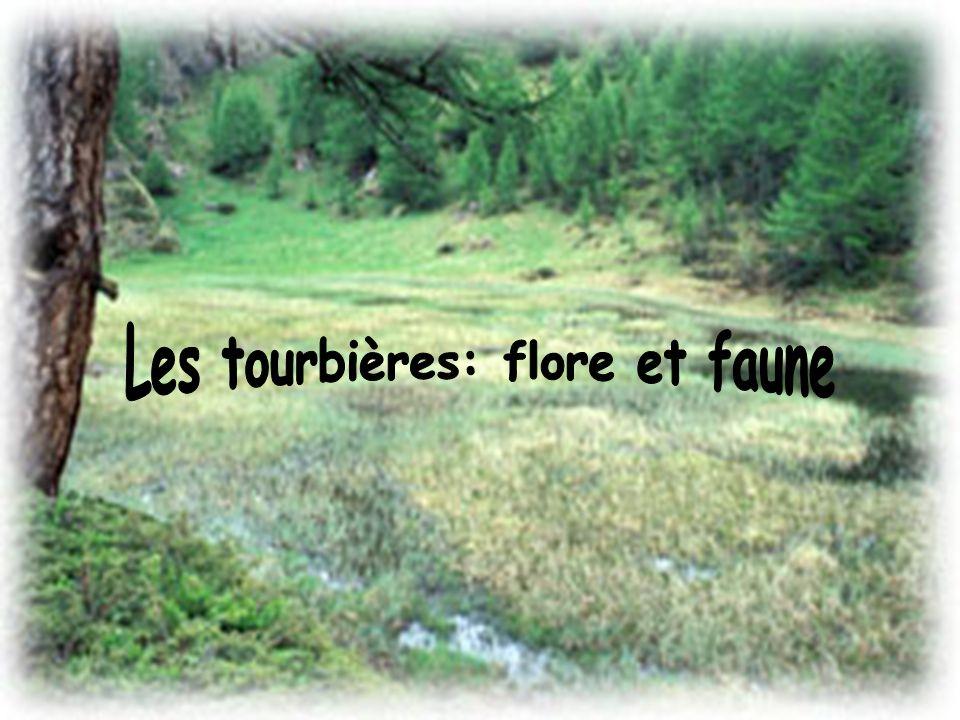 Les tourbières: flore et faune