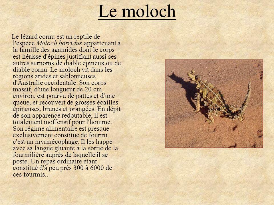 Le moloch