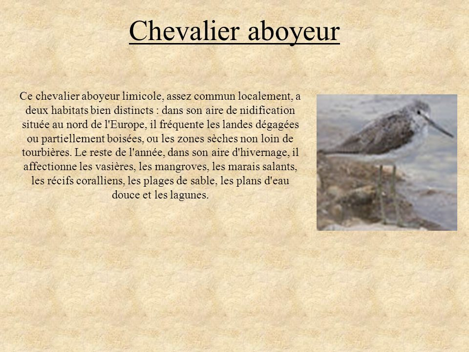 Chevalier aboyeur