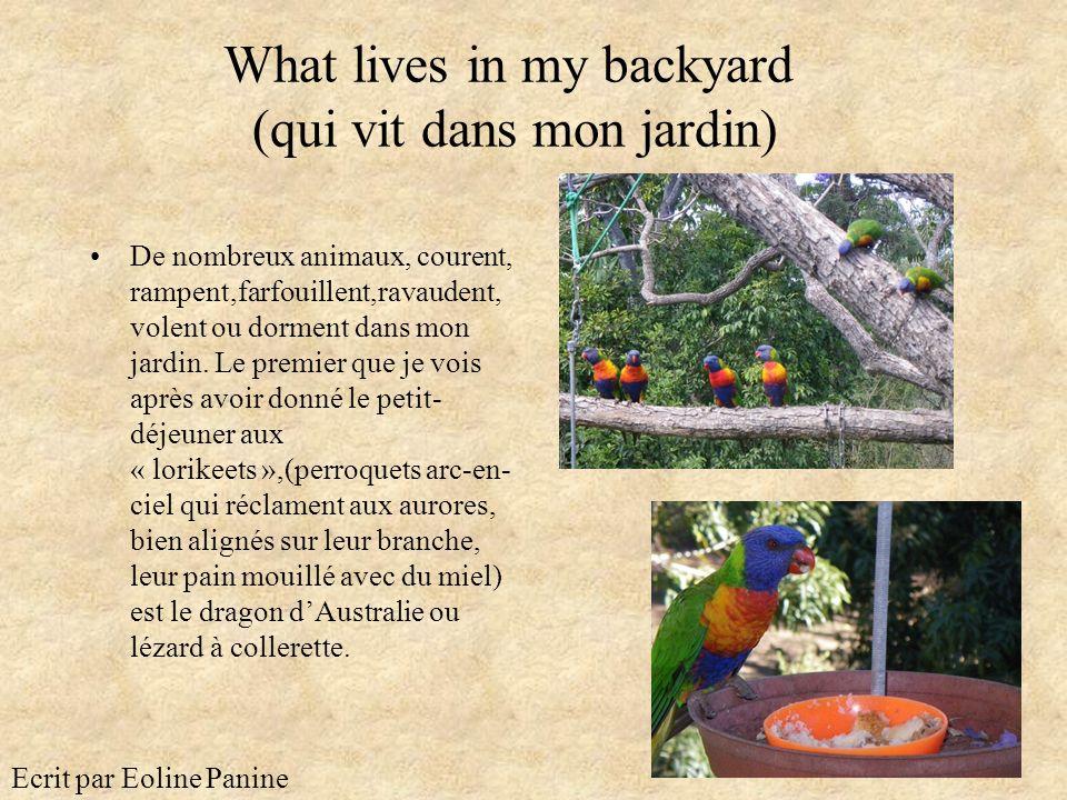 What lives in my backyard (qui vit dans mon jardin)