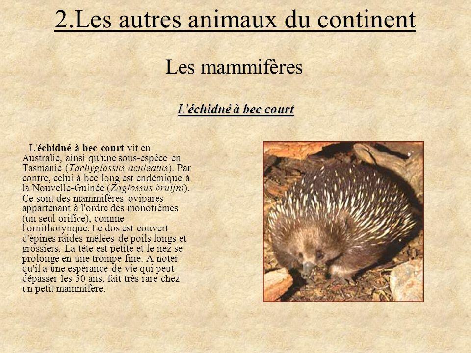 2.Les autres animaux du continent