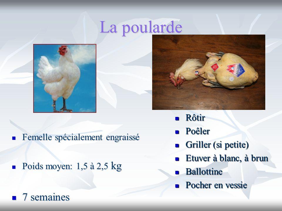 La poularde 7 semaines Rôtir Poêler Femelle spécialement engraissé