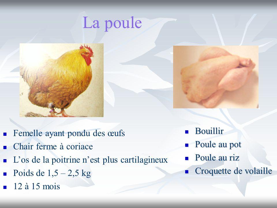 La poule Bouillir Femelle ayant pondu des œufs Poule au pot