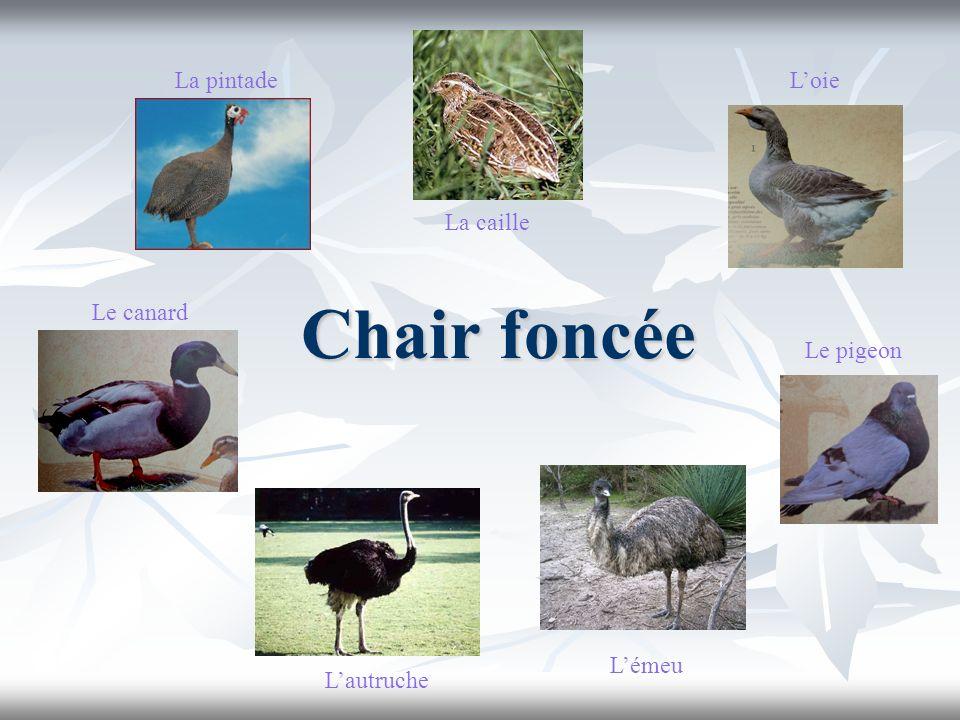 Chair foncée La pintade L'oie La caille Le canard Le pigeon L'émeu