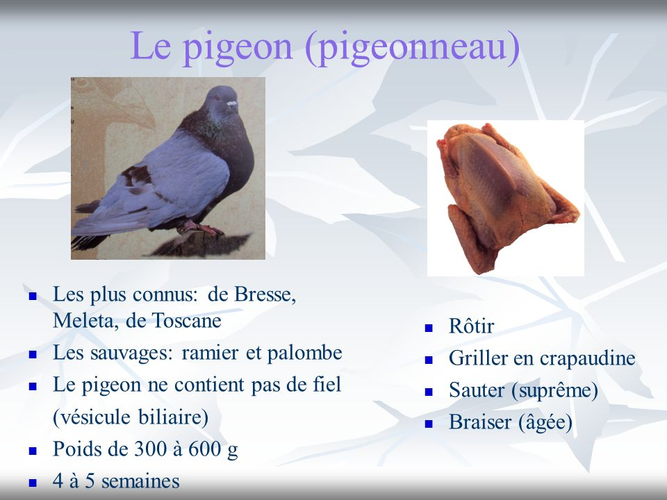 Le pigeon (pigeonneau)