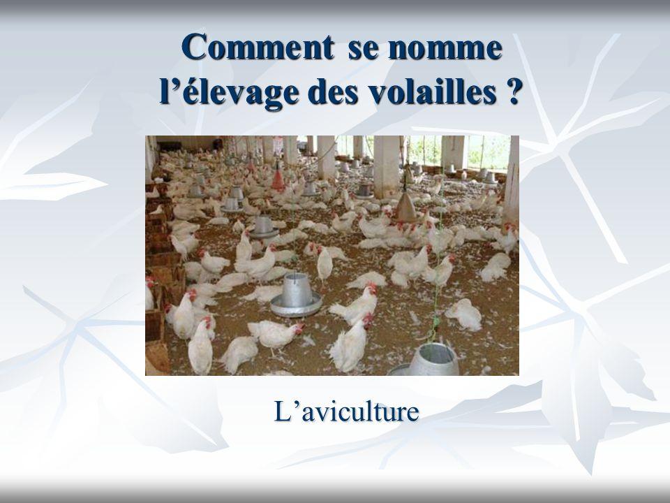 Comment se nomme l'élevage des volailles