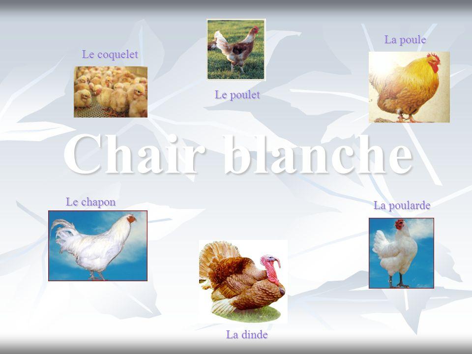 Chair blanche La poule Le coquelet Le poulet Le chapon La poularde