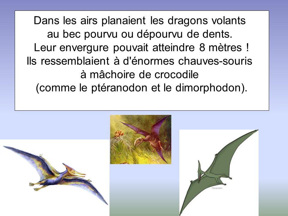 Dans les airs planaient les dragons volants
