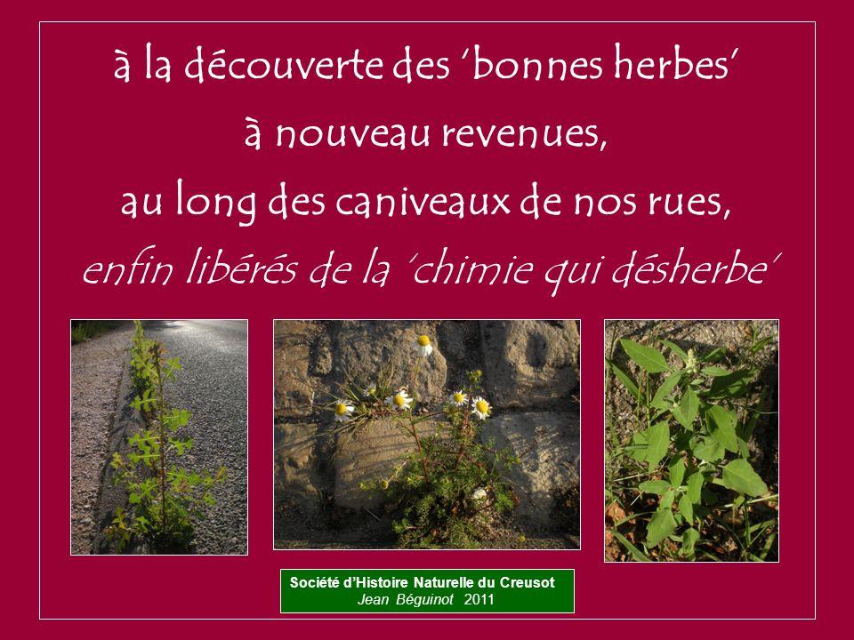 à la découverte des 'bonnes herbes' à nouveau revenues,