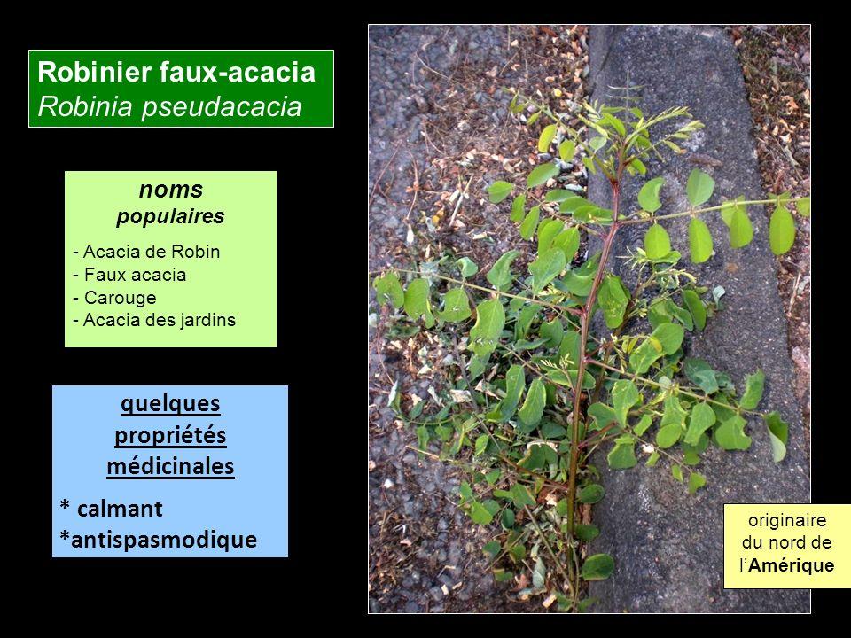 Robinier faux-acacia Robinia pseudacacia quelques propriétés