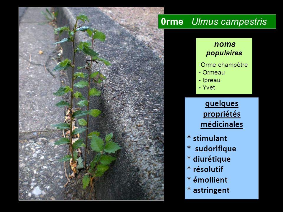 0rme Ulmus campestris quelques propriétés médicinales * stimulant