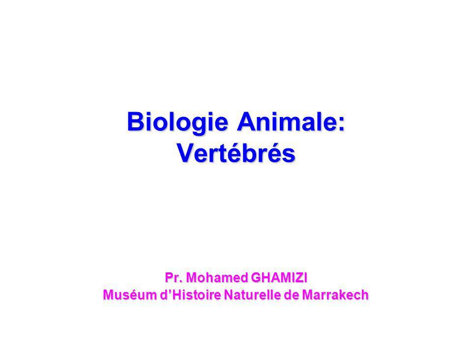 Biologie Animale: Vertébrés