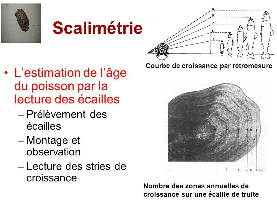 Scalimétrie L'estimation de l'âge du poisson par la lecture des écailles. Prélèvement des écailles.