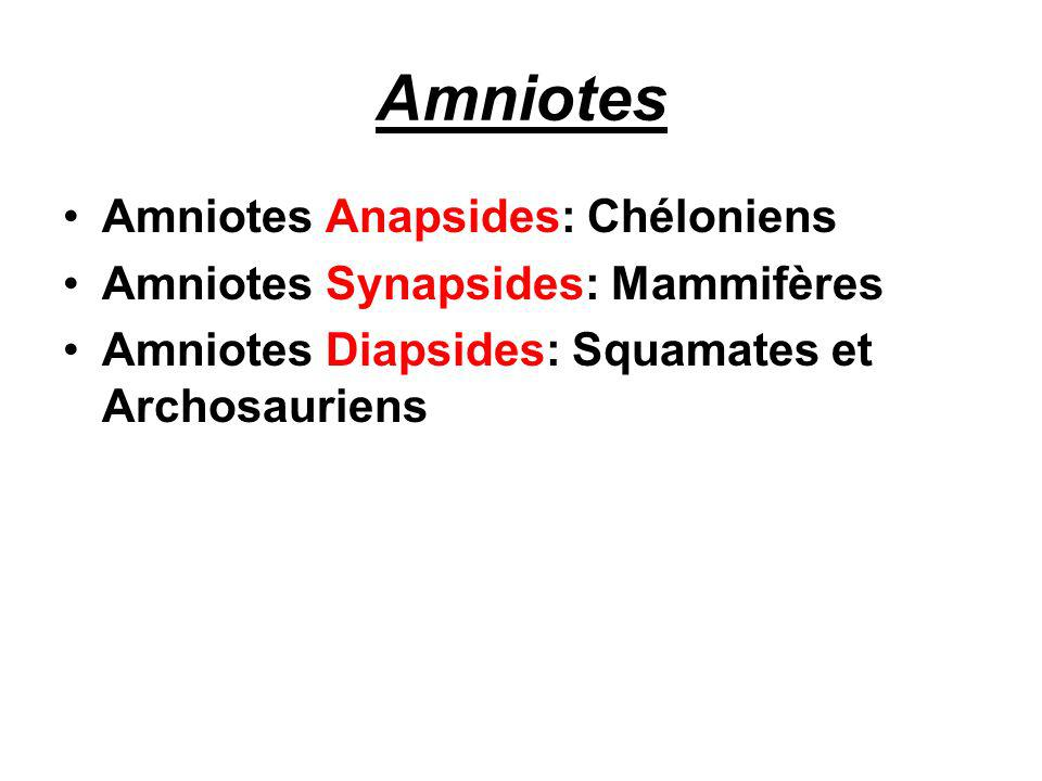 Amniotes Amniotes Anapsides: Chéloniens