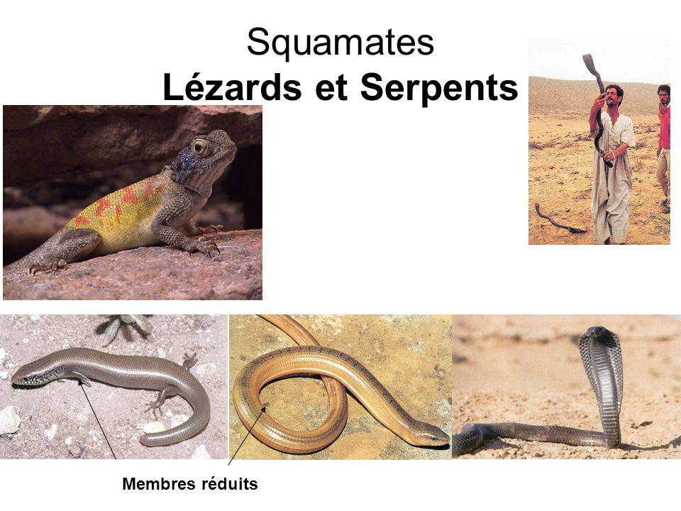 Squamates Lézards et Serpents