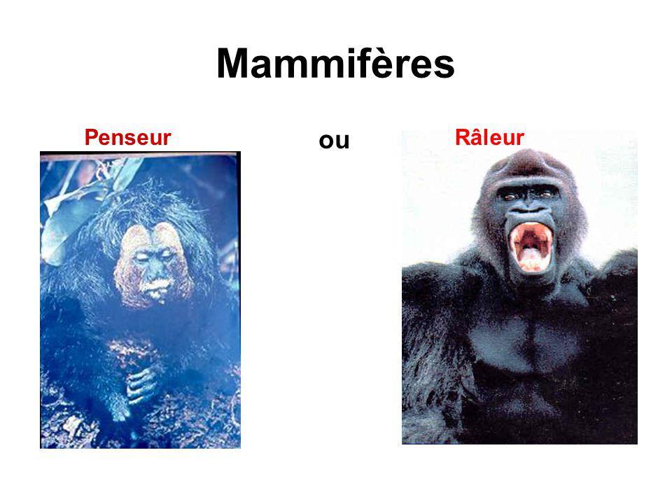 Mammifères Penseur ou Râleur