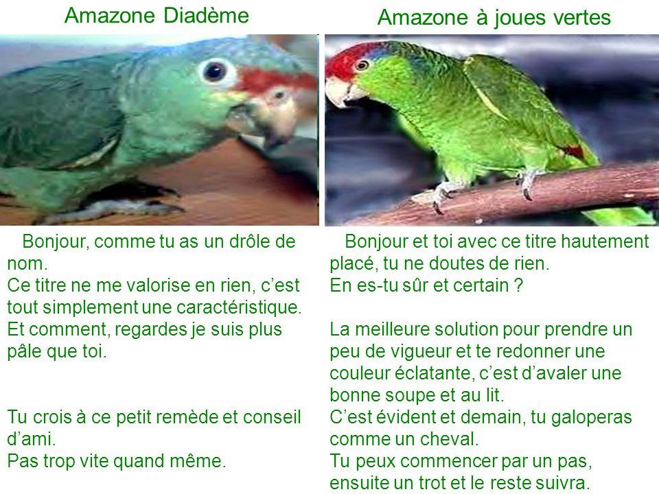 Amazone Diadème Amazone à joues vertes
