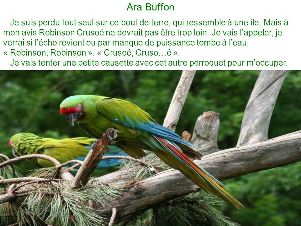 Ara Buffon