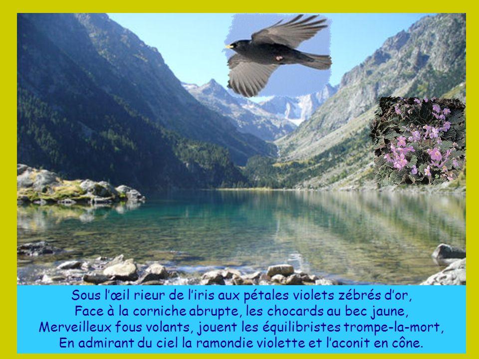 Sous l'œil rieur de l'iris aux pétales violets zébrés d'or,