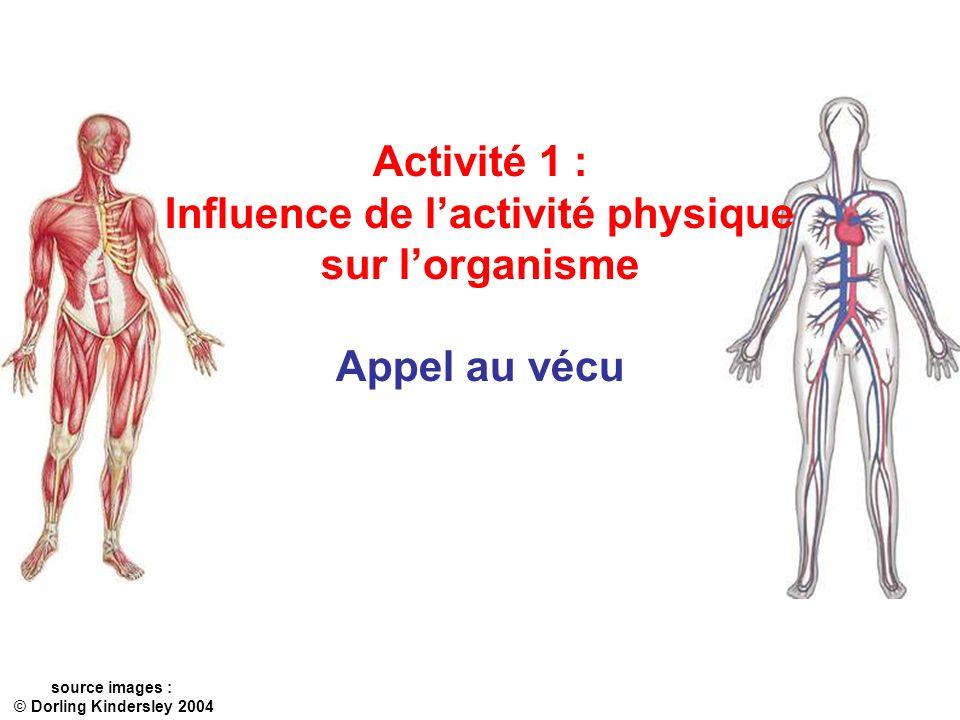 Influence de l'activité physique
