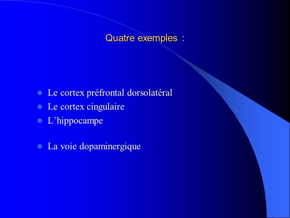 Quatre exemples : Le cortex préfrontal dorsolatéral.