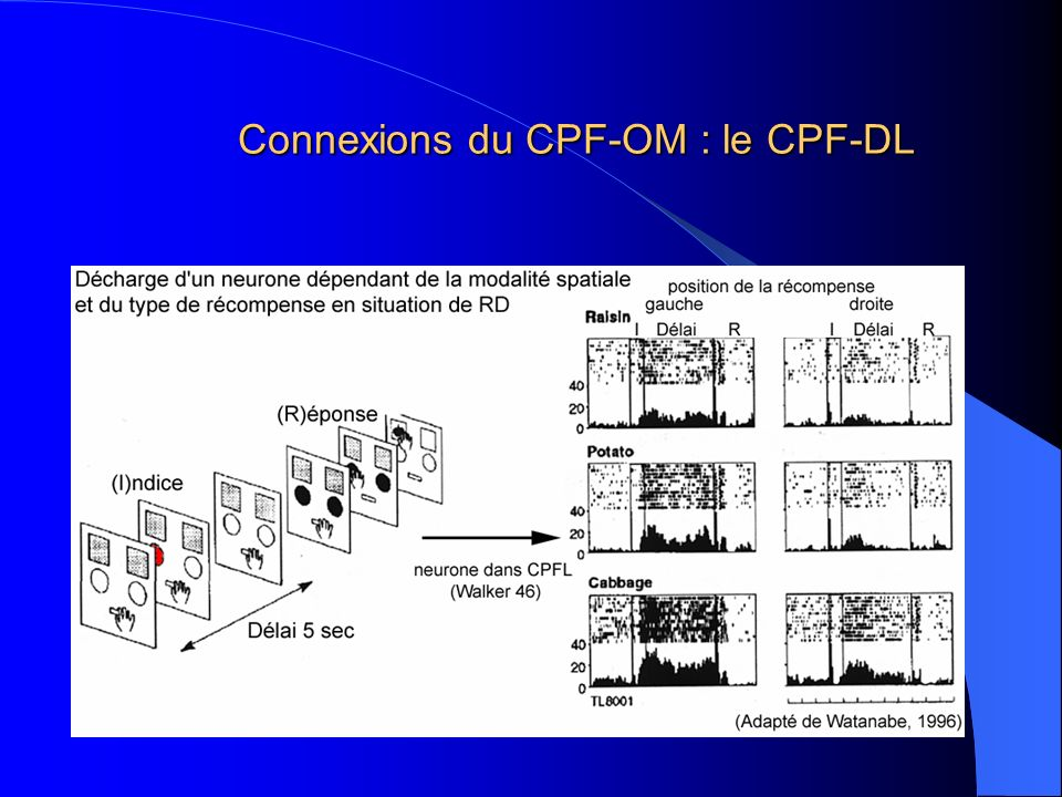 Connexions du CPF-OM : le CPF-DL